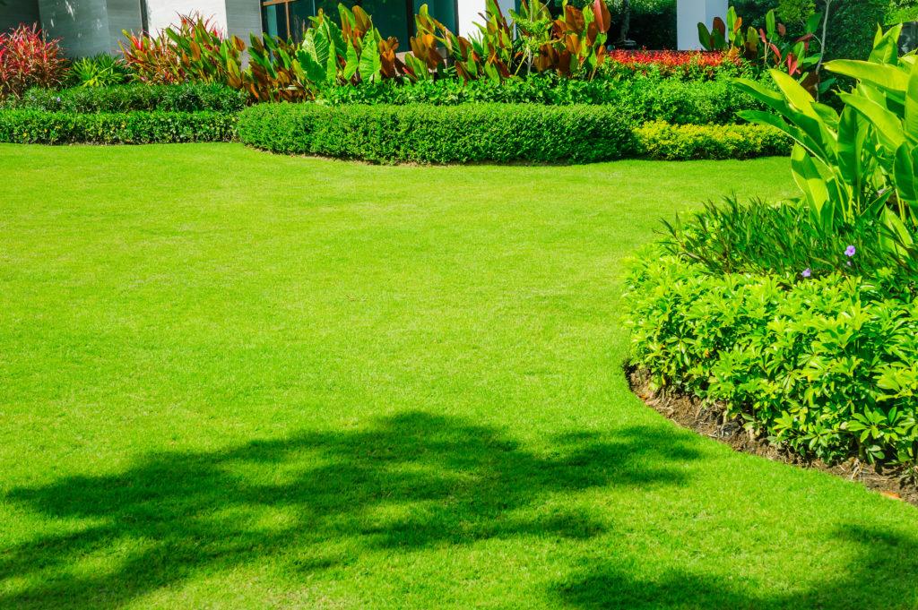 A healthy fertilize Green lawn