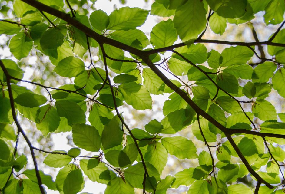 Tree & Plant Care